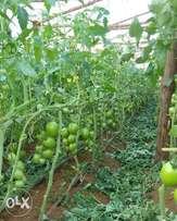 Greenhouses and maintenance