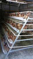 Layer battery chicken cage
