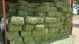 supply high quality alfalfa hay in and out of south africa