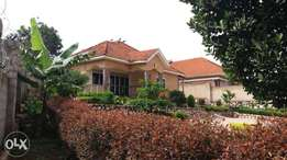 a three bedroom standalone on 25 decimals for sale in bukoto