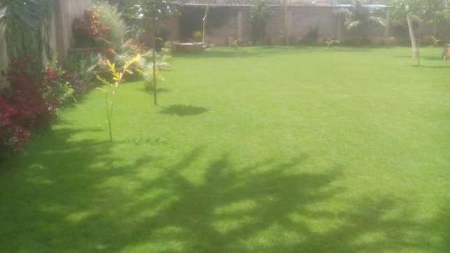 Cabro installation and Landscaping services Ruaka - image 1