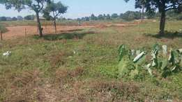 100 -50 ft crown land at kasenyi