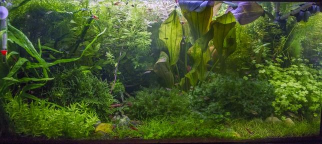 Młodzieńczy Kompletny zestaw roślin do małego akwarium + pływające + mech BG92