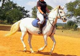 Pretty Nooitgedachter x Mare for sale