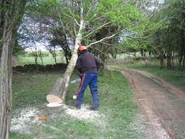 Tree Felling and Site Clearance