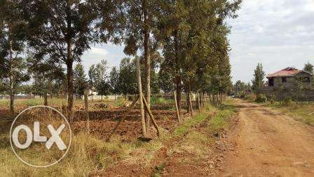 Kiambu Kamiti road Mugumo 1/4 Acre Plots for Sale Nairobi CBD - image 5
