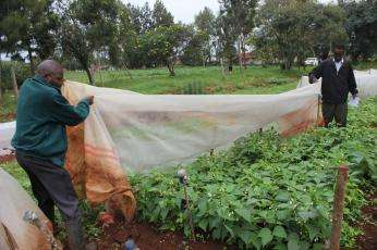 Insecticide Net (High Density) long lasting for vegetable cultivation Nairobi CBD - image 2