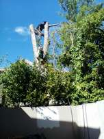 we are well equiped tree felling and stump removal