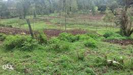 Serenely located assorted 1/8 plots for sale,with title