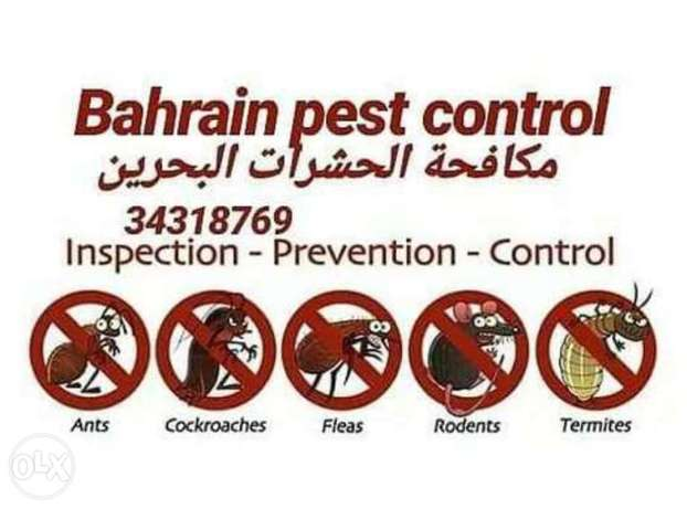 Pest control services All over bahrain