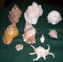 9 awesome sea shells R150.00 for all