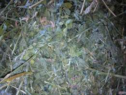 Buy Prime Lucerne Small squares Bales