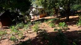 Plot at kilifi kiwandani 100 by 100 with a house of two bedroom asking