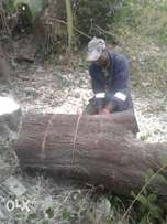 petram tree felling