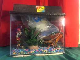 Fish Tank + Equipment for Sale!