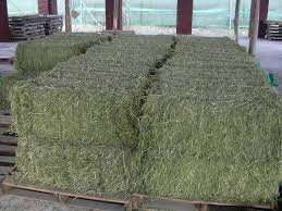 Quality lucerne and Alfalfa and others for sale