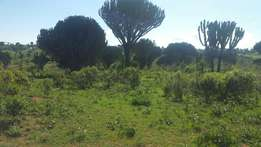 6acres for Sale in Timau, Nanyuki.