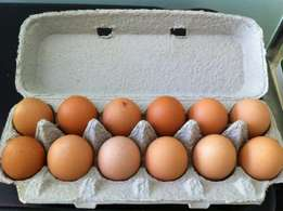 Eggs, crate 50R, box 550R, crate has 36 eggs and box 432 eggs.
