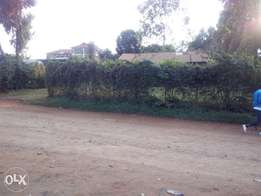 A prime 100*100 plot a Rungiri on 1st row for lease