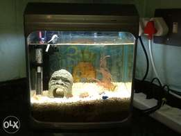 JEBO 310 fish tank for sale.