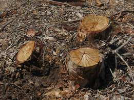 tree felling, bush clearing and stump removal | Kuils River
