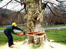 Build Direct Tree Felling and Garden Services we a the best contact us