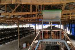 A newly built and functional poultry farm for sale in Maraba