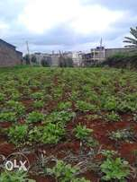 Prime plot for sale in Ruaka 100 by 100