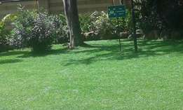 zimbabwe grass, gardenscape products and services