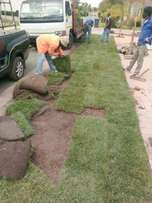Need Instant Lawn? Kikuyu,LM & Evergreen With Top Dressing: Call Paule