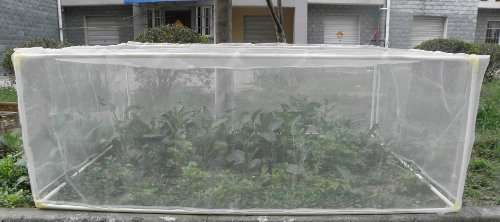 Insecticide Net (High Density) long lasting for vegetable cultivation Nairobi CBD - image 3