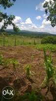 3 acres on sale at musiita at ugx13m per acre