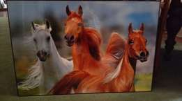 Laminated horse poster