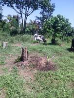 100 acres of land at koome island at ugx3m per acre