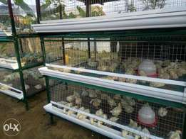 Broiler Poultry Cages
