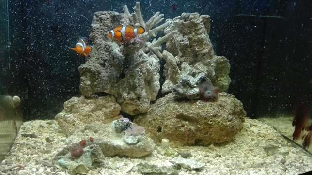 marine tank with breeding lair of clowns full setup Mitchell's Plain - image 8