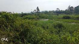 30acres of millo land with a title on sale in Bombo-kalule esch at 25m