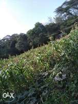 5 acres for sale in Ngong