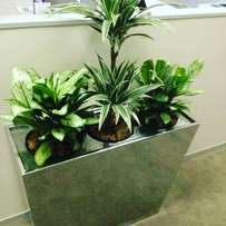 Indoor plants weekly maintenance and carpet/window cleaning