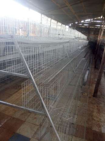 Homestead farm cages.capacity 1000 with free installation. Kasarani - image 5