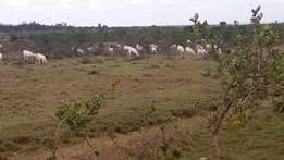 4, 200 Acres ranch in Rumuruti