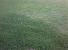 Plots for sale in Nyeri, 1/4 acre