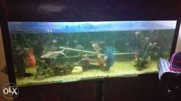 tank for sale