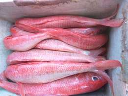 Fresh/Quality Indian Ocean Sea Fish Shipped all over Kenya.