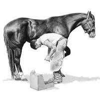 Farrier/Hoefsmid travel all areas guaranteed