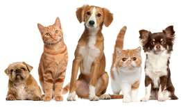 House and Pet Sitting Services in Bloemfontein