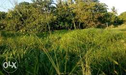 Offer price!!! Kona ya musa south coast (1/8 an acre)