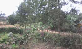 1/8 Land for sale at Wangige, cura