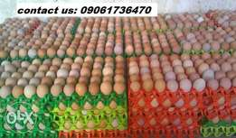 fresh crates of eggs directly from the farm for sale and delivery for sale  Port Harcourt