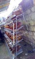 Battery Cages for 46birds